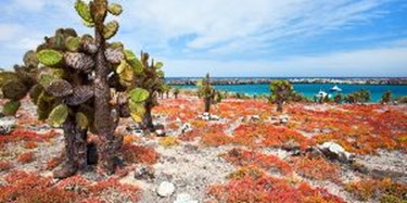 South Plaza Island, Galapagos Islands, Ecuador