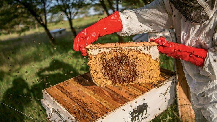 Beehives provide multiple benefits, including a source of income from honey production, an incentive to protect wooded areas and even created an effective buffer to elephant incursions into farms.