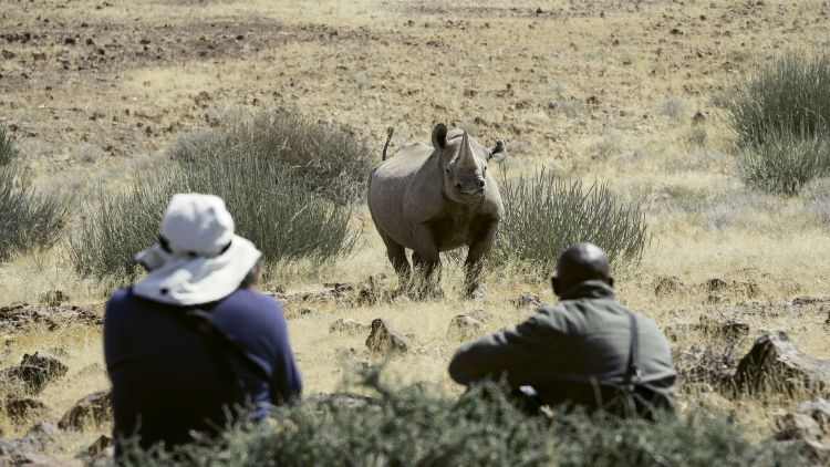A sustainable and responsible conservation activity for travelers is rhino tracking at the Wilderness Desert Rhino Camp in Namibia.