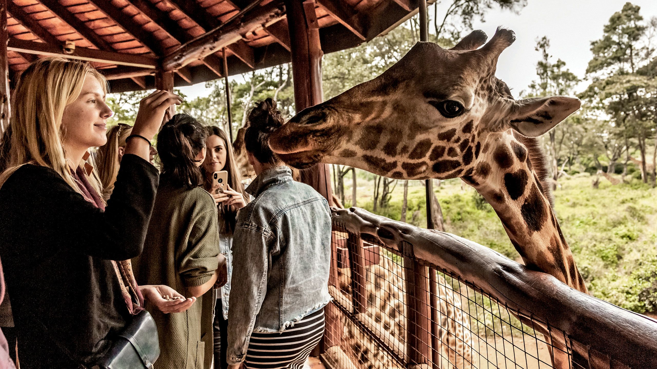 A guest feeds a giraffe at the popular Giraffe Center in Nairobi. Photo by Susan Portnoy