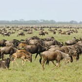Zohar African Safaris courting U.S. agents with 15% commission through March 31