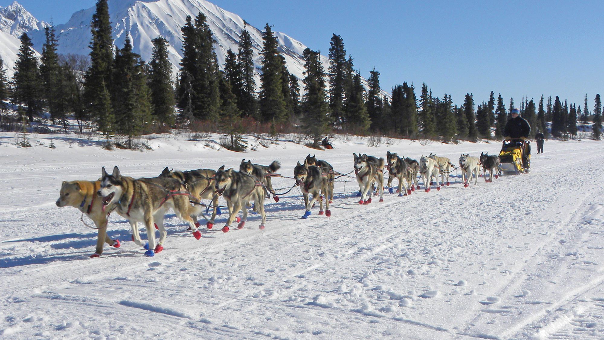 Along The Iditarod Trail Travel Weekly