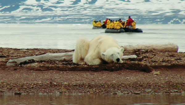A bear sighting during a Quark Expeditions trip.