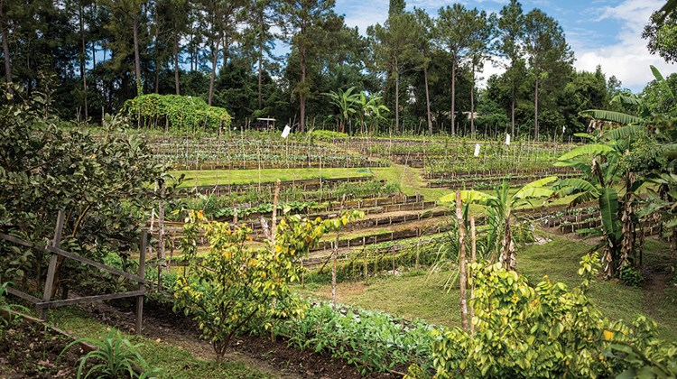 An organic garden supplies much of the produce at Blancaneaux Lodge.