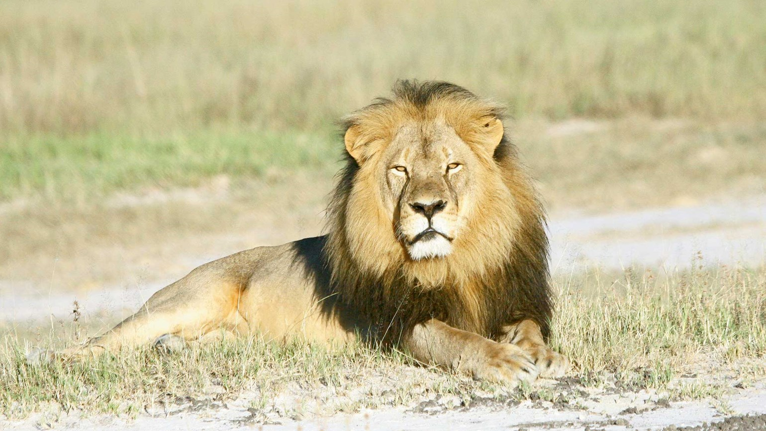 Lion killing exposes dark side to African big-game hunting