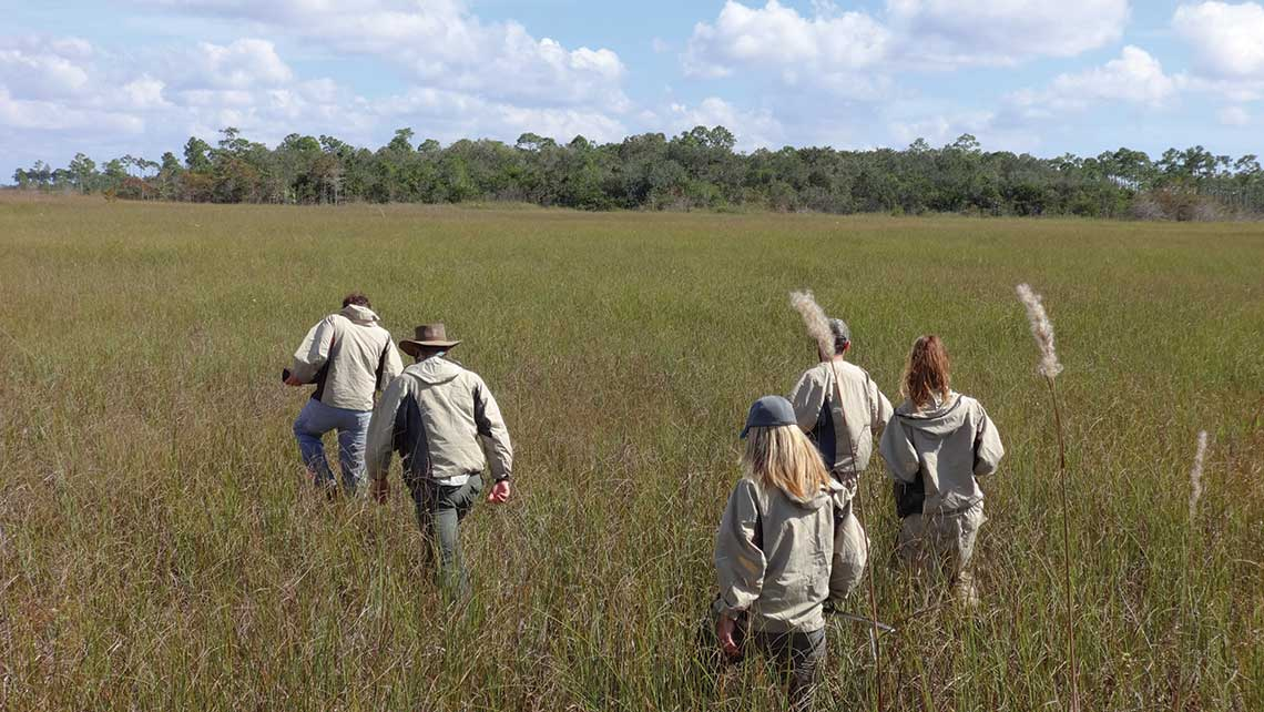 Hikers make their way through a sawgrass prairie in Everglades National Park. Photo Credit: Robert Silk