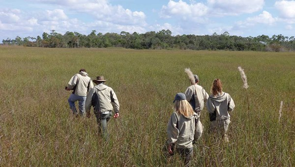 Hikers make their way through a sawgrass prairie in Everglades National Park.