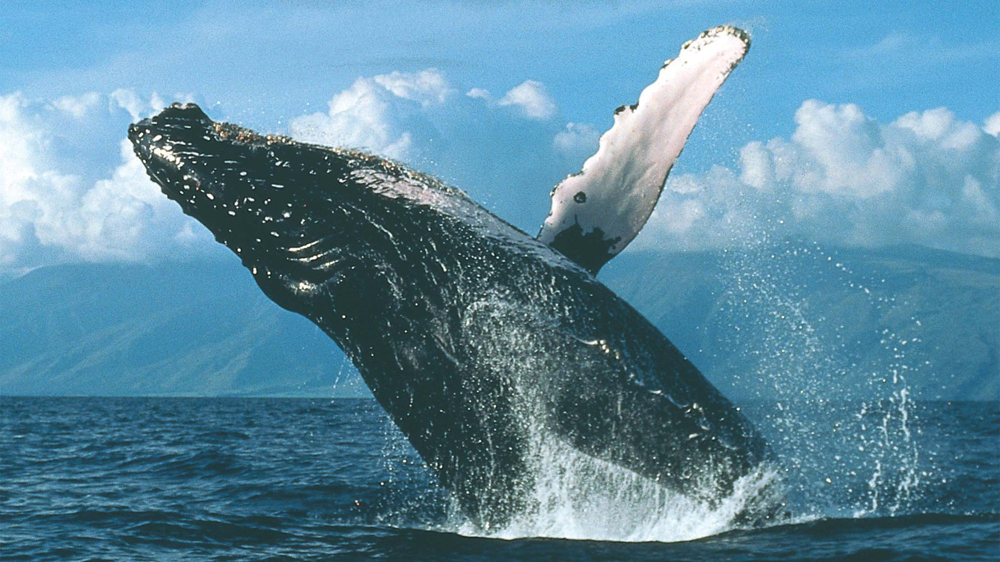getting a jump on whale watching season travel weekly