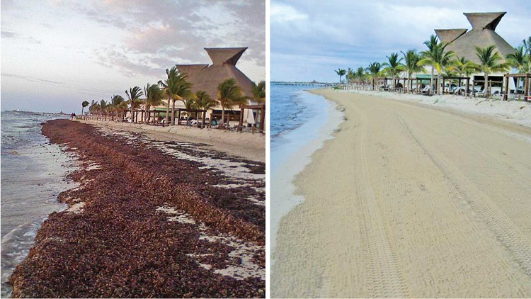 Caribbean Mexico Fighting Sargassum With Heavy Duty