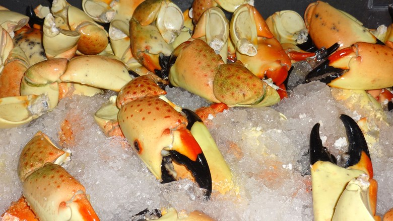Stone crabs sitting ready for sale at Key Largo Fisheries.