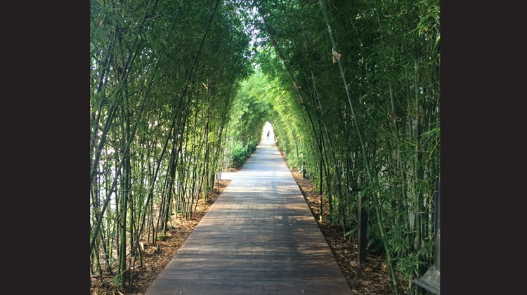 A walkway framed by bamboo leads from the hotel to the beach.