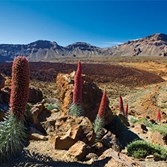 Complimentary Canary Islands land tour
