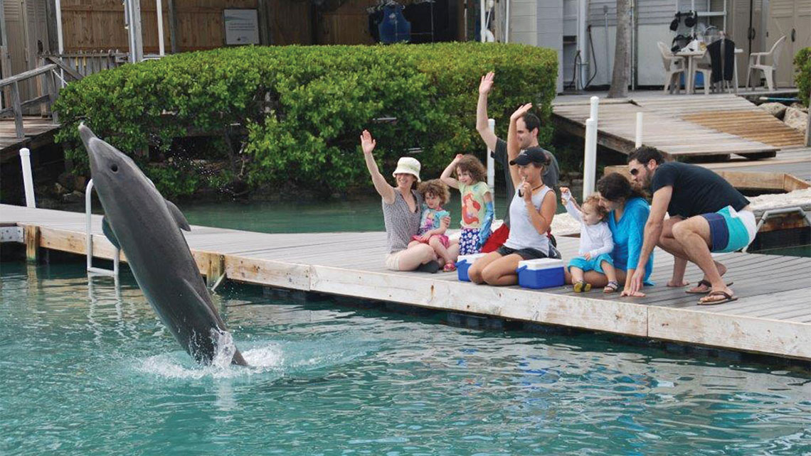 The Hawks Cay resort's dolphin encounter program is touted as the only facility in the mainland U.S. that offers free public viewing of trained dolphins.