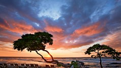 Longtime seller still enamored with Hawaii