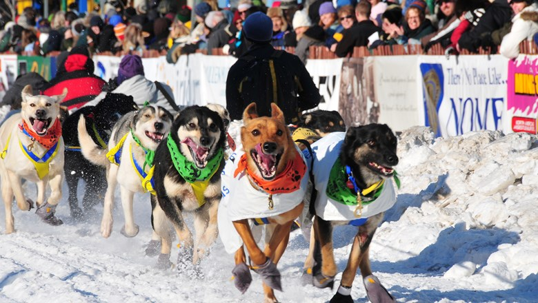 Thousands of people cram the streets of downtown Anchorage in early March for the ceremonial start of the Iditarod Trail Sled Dog Race.