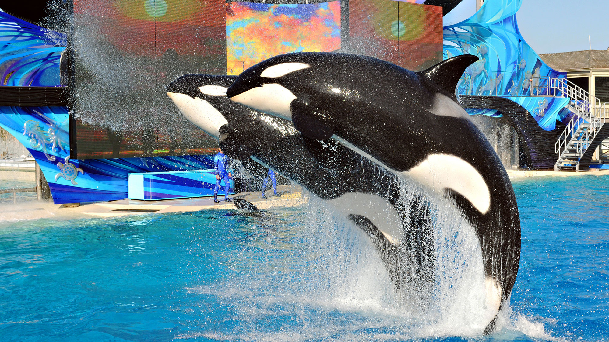 Seaworld To End Orca Shows Travel Weekly