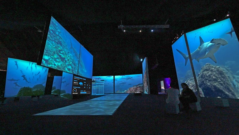 "In the Bishop Museum's ""Planet Shark: Predator or Prey"" exhibit, a series of floor-to-ceiling video screens showcase different sharks."