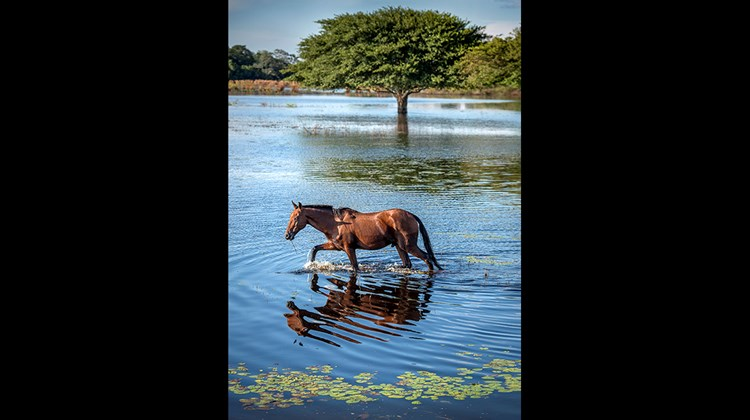 A horse near the San Joao Lodge in the Pantanal.<br /><br /><strong>Photo Credit: Mark Edward Harris</strong>
