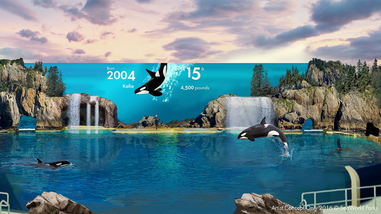 SeaWorld describes upcoming orca exhibit as 'live documentary'