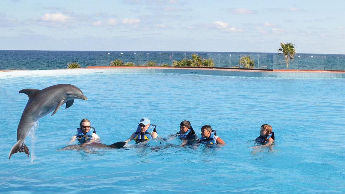 The dolphinarium at the Grand Sirenis Riviera Maya Resort & Spa in Mexico. ShoreTrips.com said dolphin encounter sales were up 4%.