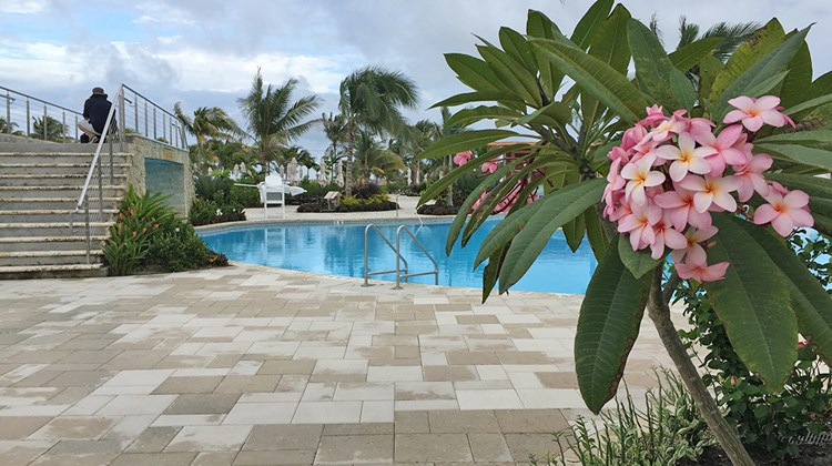 Harvest Caye in Belize has a wide variety of trees, including flowering Frangipani by the pool.