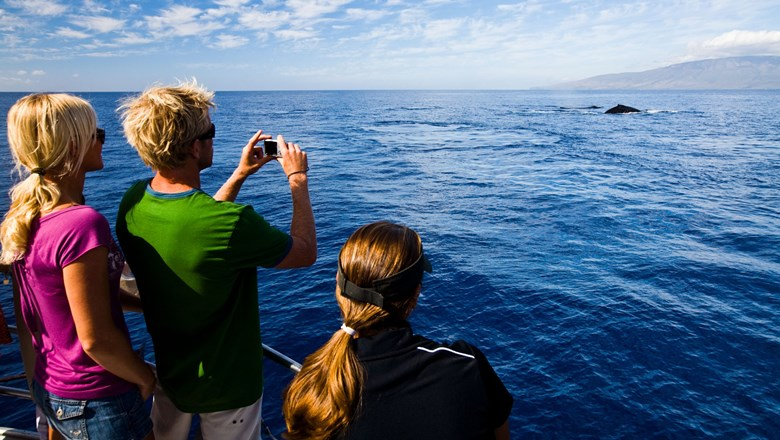 A group spots a humpback whale off the bow of their whale-watching vessel.