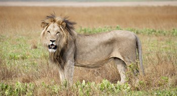 New conservation expeditions to key emerging African destinations