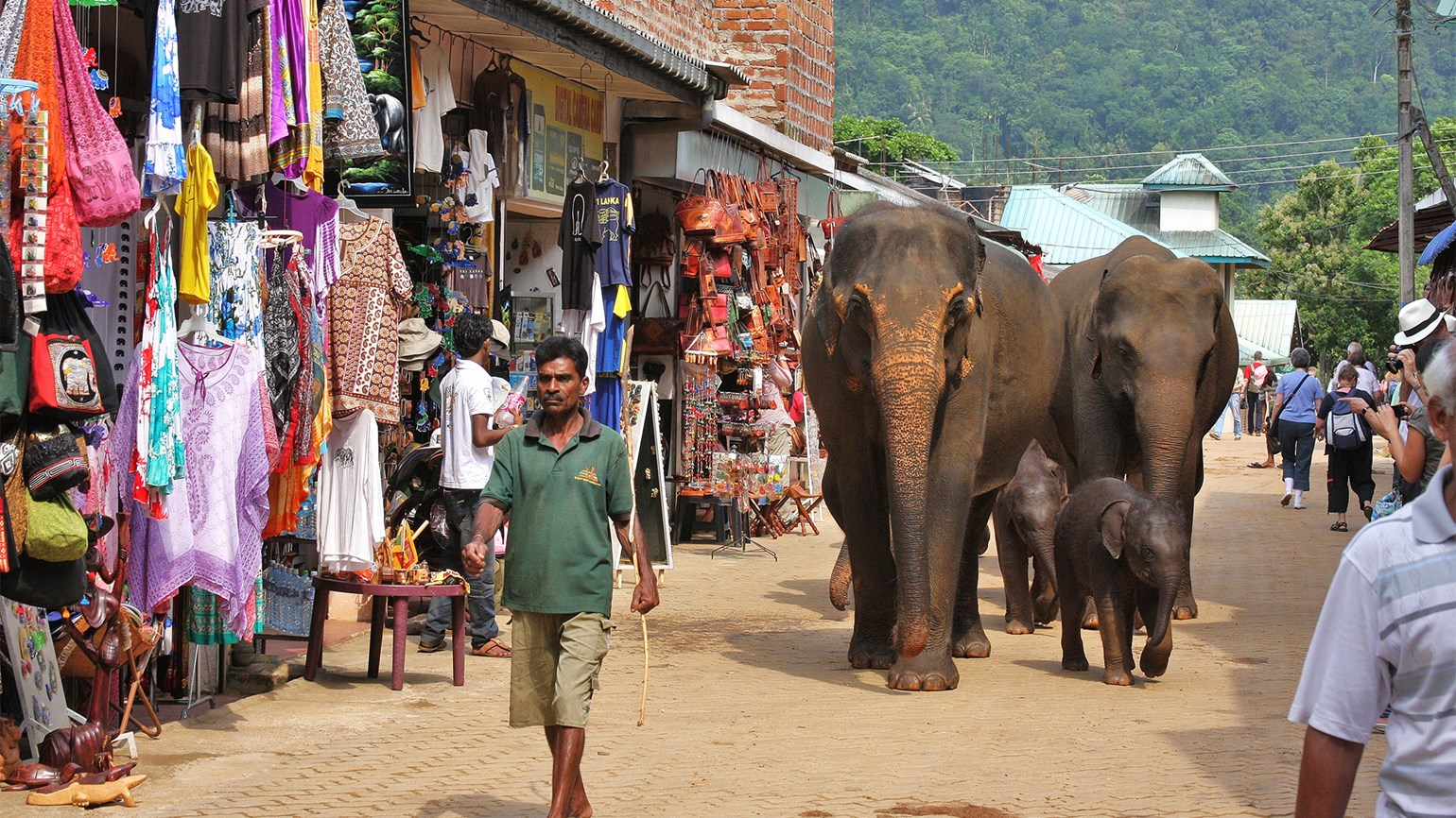 Sri Lanka tour, $2,699