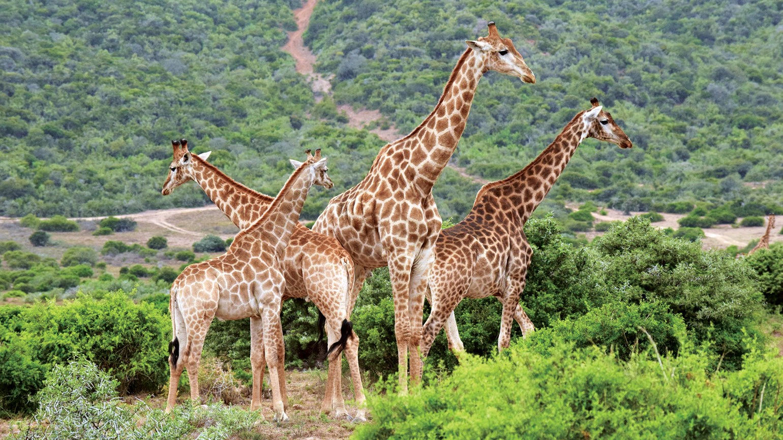 Safari in harmony at Shamwari Game Reserve