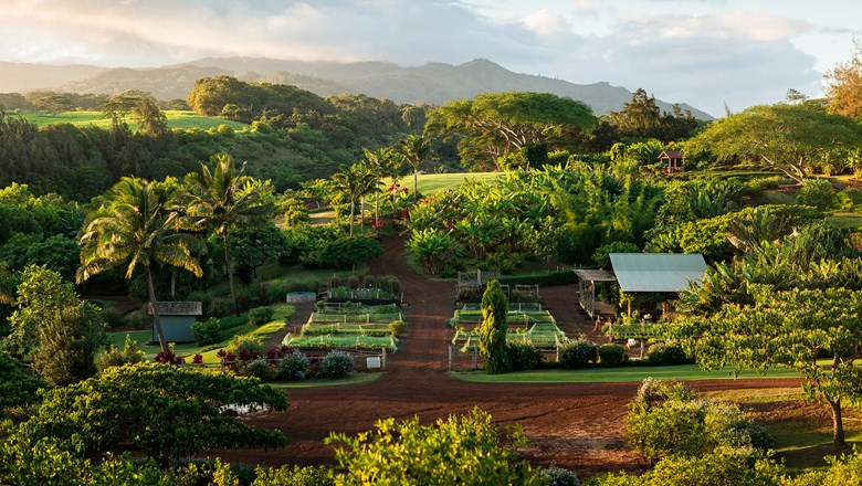 The farm at Kukuiula on Kauai's southern shore provides produce for the resort restaurant and is host to many public programs. The property is in the process of doubling its growing area.