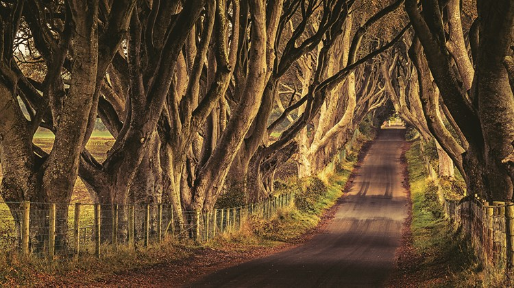 "Gnarled, tunnel-like Dark Hedges, known as Kingsroad to ""Game of Thrones"" devotees.<br /><br /><strong>Photo Credit: Patrick Lennon/Tourism Ireland</strong>"