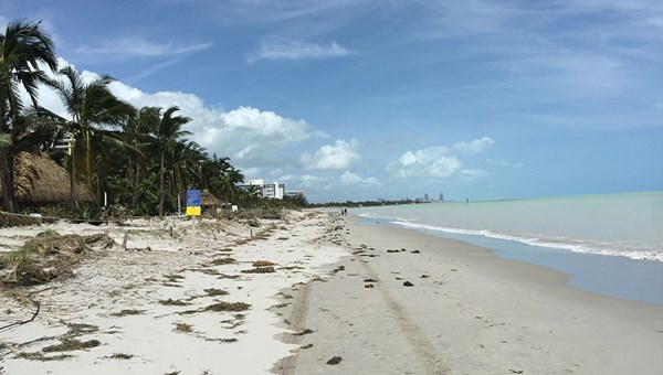 The beach on Key Biscayne, near the Ritz-Carlton.