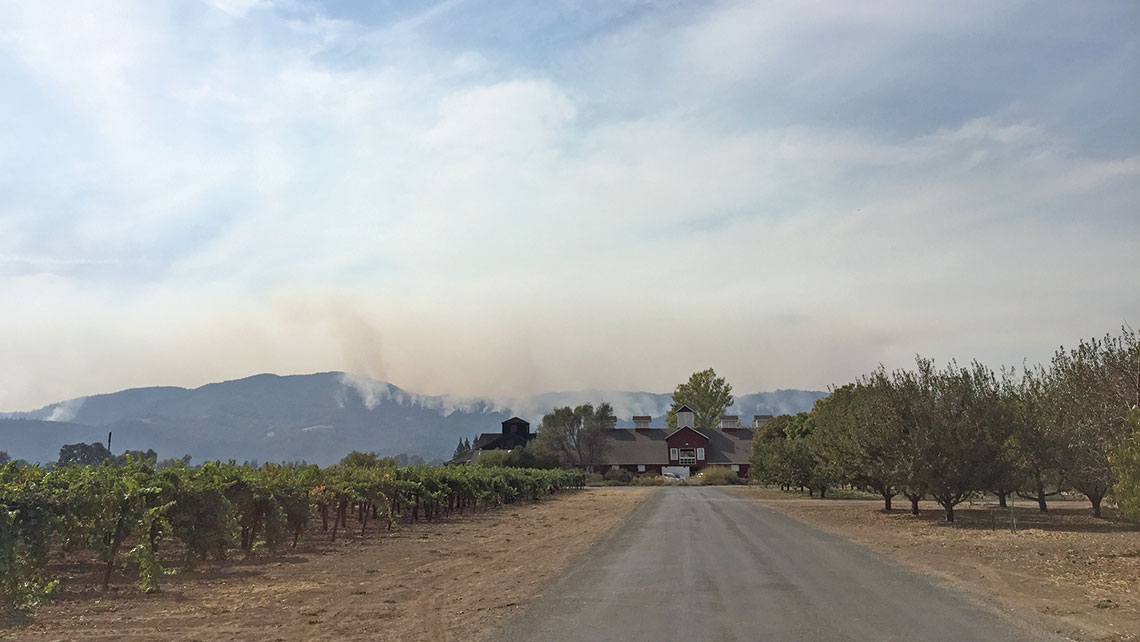 Smoke from the Nuns Fire in eastern Sonoma billowed behind Napa's Frog's Leap Winery. Photo Credit: Michelle Baran