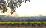 Napa Valley wildfires, one week later