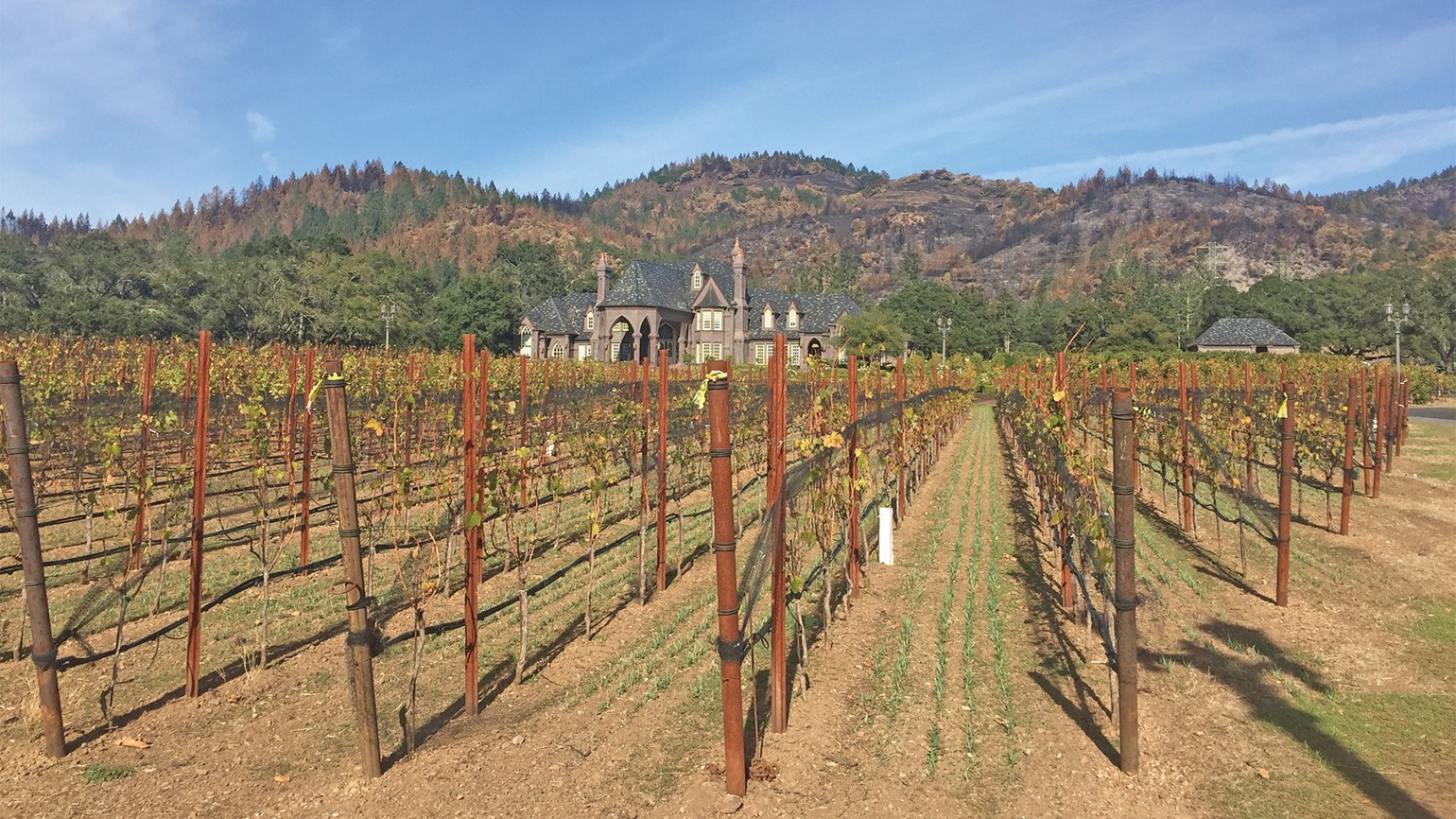 California's wine country is bountiful and beautiful