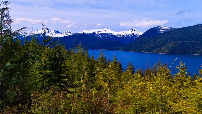 Tongass National Forest in Wrangell, Alaska.