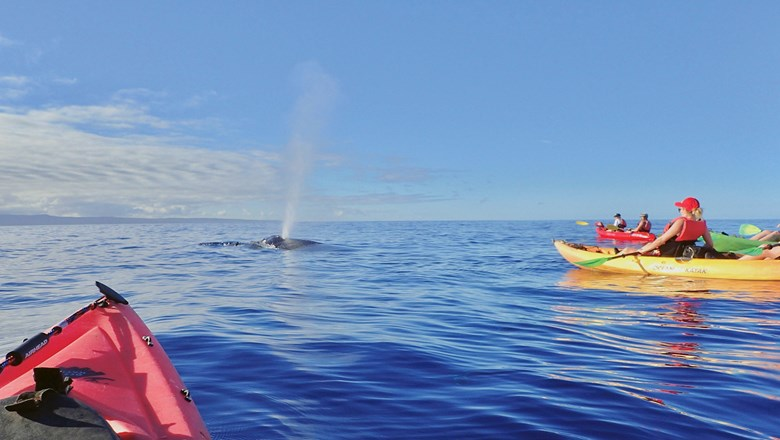 Kayakers on a Hawaiian Paddle Sports whale-watching tour.