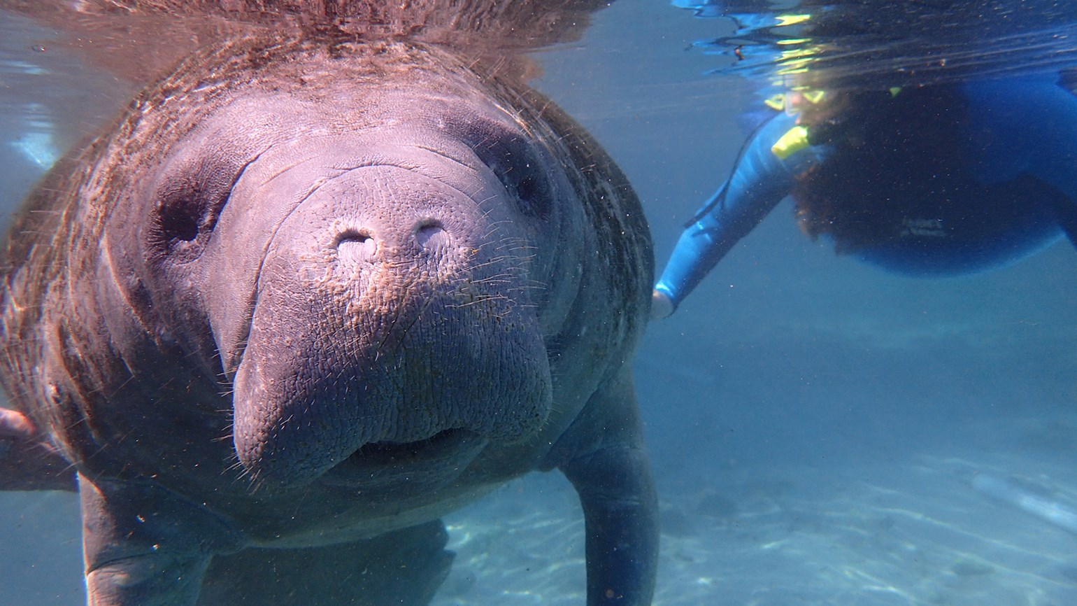 Time is right to swim with the manatees in Crystal River