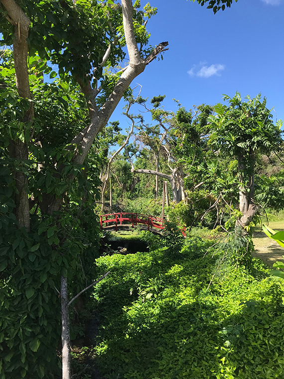The St. George Village Botanical Garden in St. Croix is rebounding with lush foliage and greenery. Photo Credit: Gay Nagle Myers