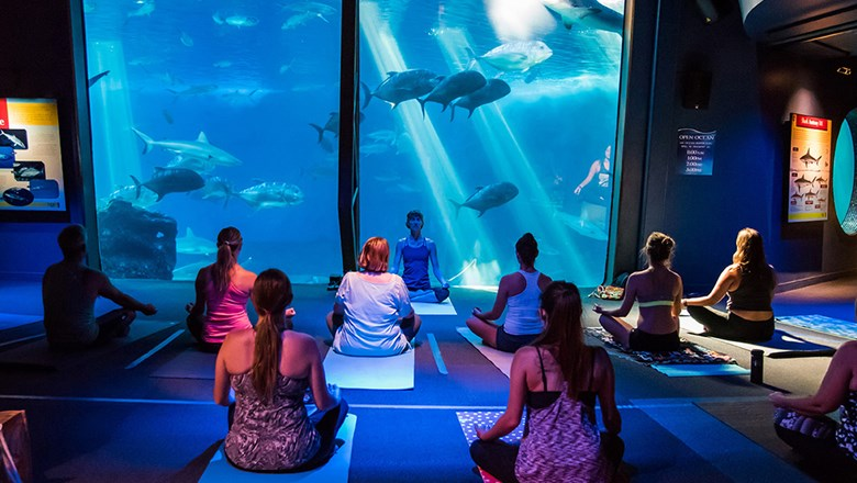 There are several memorable yoga experiences available in Hawaii, from aquarium programs, to moonlight and floating sessions.