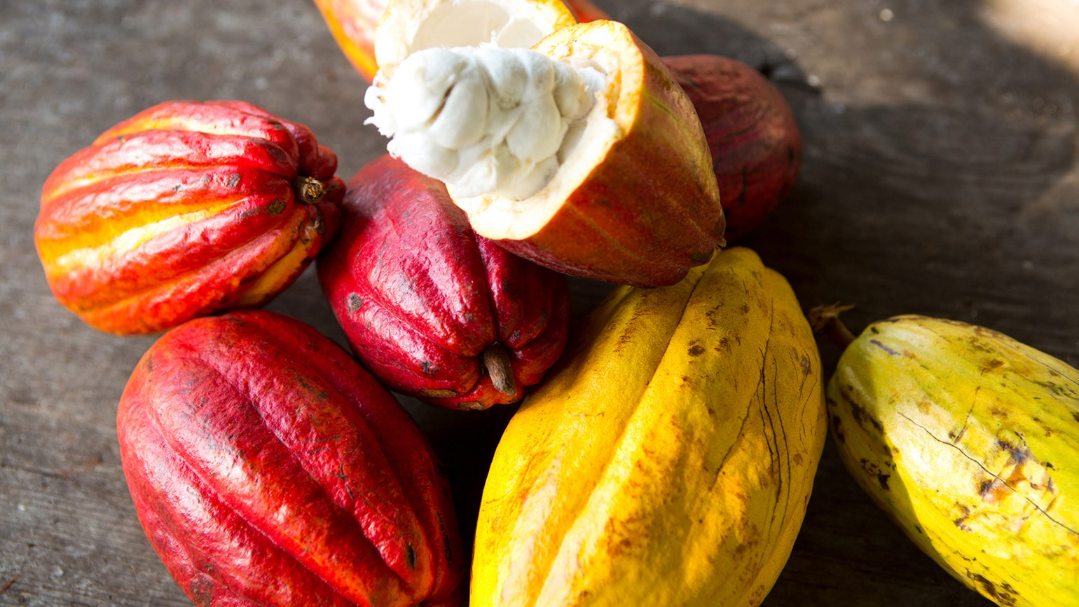 Sweet success for Hawaii's chocolate producers