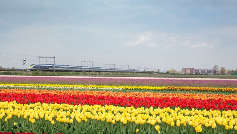 Eurostar will launch direct London-Netherlands rail service in time to catch the tulip blossoms this spring.