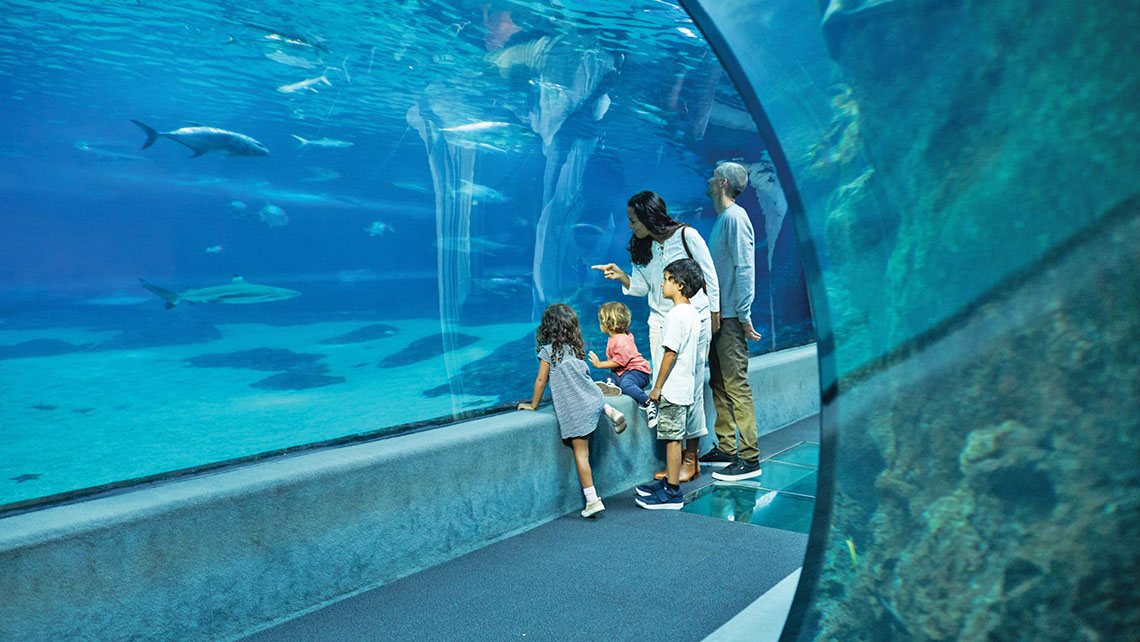 The Maui Ocean Center features daily presentations, an outdoor tide pool, a 750,000-gallon Open Ocean Exhibit and a large collection of live Pacific corals. Photo Credit: Daeja Fallas/Hawaii Tourism Authority