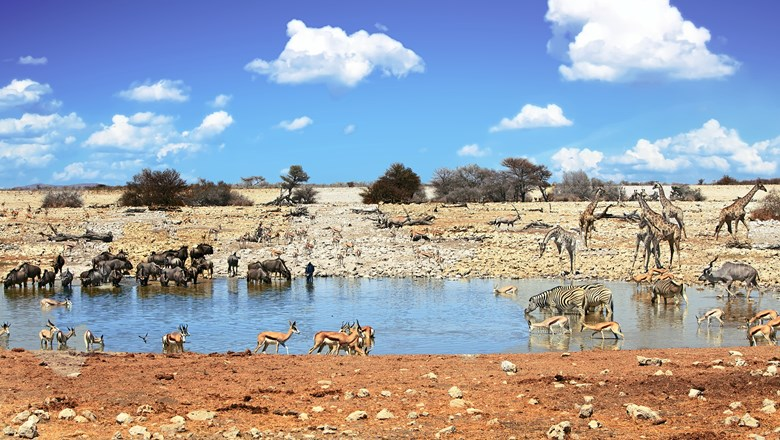 A waterhole in Etosha National Park, part of the the King Nehale Experience along the self-drive Omulunga Palm Route in Namibia.
