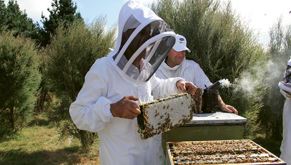 Comvita co-founder Alan Bougen handles a frame from a beehive.