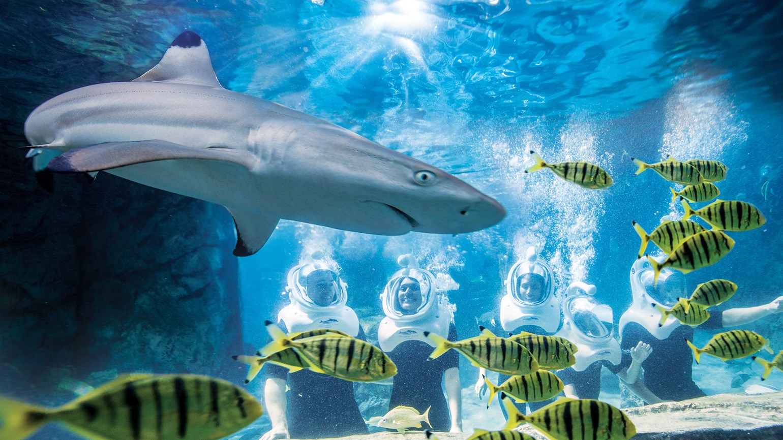 SeaWorld paying 30% commission on Discovery Cove bookings