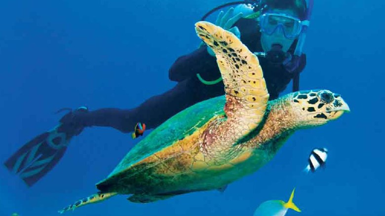 AndBeyond turns focus to Marine Conservation Initiative