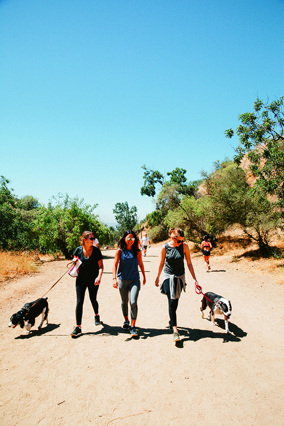 Travelers hike Los Angeles' Runyon Canyon Park with rescue dogs on an Airbnb Experiences outing. Airbnb Experiences launched in 2016.