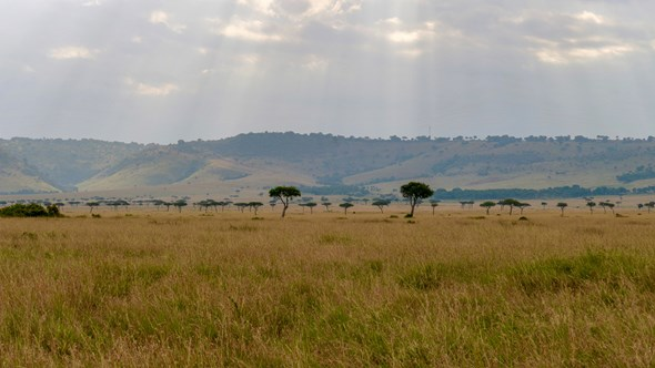 The marvels of the Masai Mara