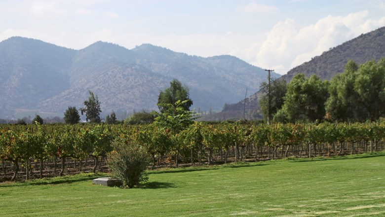 Vineyards with an imposing mountain backdrop at Santa Rita Winery in the Maipo Valley region of Chile.